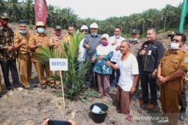 PTPN V replanting 1.100 ha lahan sawit plasma di Lubuk Dalam Siak