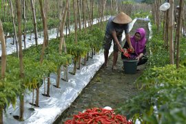 Urban farming plays role in lowering Surabaya's poverty rate