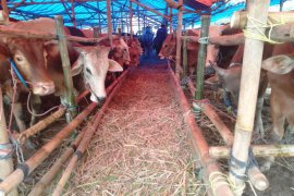 Pemkab Purwakarta melarang penjualan hewan kurban di trotoar jalan perkotaan