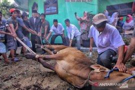 Pemkot Bogor izinkan penyembelihan hewan kurban di RPH atau masjid