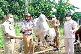 Hewan kurban yang dijual di lapak Kota Sukabumi dipastikan kondisinya sehat