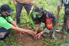 HUT ke-62 Kodam XII/Tpr, anggotaTMMD Tanam 1000 pohon