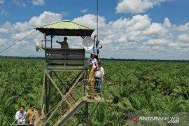 Disbun Kalbar terus bina perusahaan perkebunan sawit untuk cegah karhutla