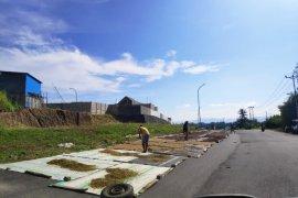 Proses jemur cengkih, petani manfaatkan jalan lebar di Manado Page 1 Small