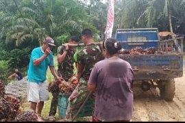Anggota Satgas TMMD 108 bantu warga timbang sawit