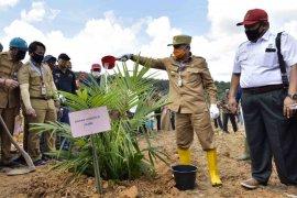 Pemprov Jambi dorong ekonomi kerakyatan melalui peremajaan sawit rakyat