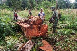 Anggota TMMD bantu warga potong pohon tumbang