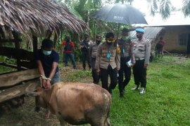 Pelaku pencurian ternak diringkus saat kesulitan menaikan sapi curian ke mobil minibus