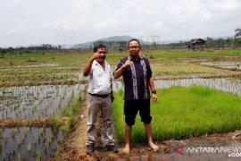 Petani Tapsel bergairah garap lahannya setelah ganti sawit ke padi
