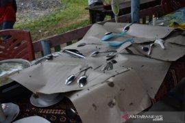 Hama lalat serang sejumlah desa di Muara Batang Gadis