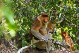 Pulau Bakut, Rumah si Monyet Belanda.