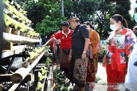 Bupati Gianyar dorong usaha pertanian di lahan rumah hadapi pandemi COVID-19