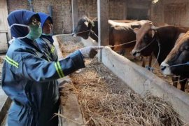 Pandemi COVID-19, kebutuhan hewan kurban di Madiun diperkirakan tetap meningkat