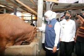Khofifah: Peternak di Jatim diimbau lakukan sertifikasi kesehatan hewan sebelum dijual