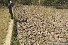 14 kecamatan di Garut rawan kekeringan saat kemarau