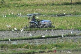 90 persen lahan sawah di Abdya tuntas digarap petani