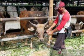 Belasan hewan kurban tak layak jual di Jakarta Timur