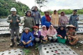 SMGP bina kelompok tani Mekar Sari Desa Aek Marian