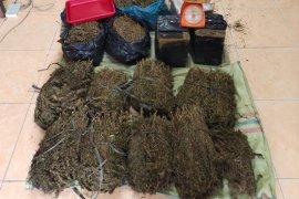 Penyeludupan ganja seberat 36 kilogram digagalkan polisi