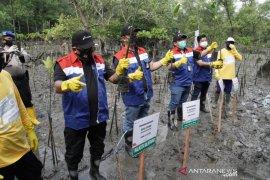 PT Pertamina tanam 2.000 bibit mangrove di pesisir Balikpapan