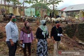 Pemprov Maluku akan siagakan tenaga medis di lokasi potong hewan kurban