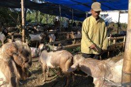 Pemkot Malang  terbitkan aturan pelaksanaan pemotongan hewan kurban