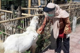 Di Banyuwangi, distribusi daging kurban diantar langsung ke rumah penerima