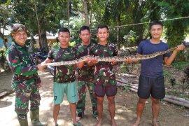 Anggota TMMD berhasil tangkap ular pemangsa ternak peliharaan warga