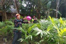 TMMD 108 Kodim 1202/Skw bantu Ibu Mustakimah siram tanaman sawit
