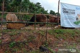 Penjual hewan kurban di Ambon panen rejeki