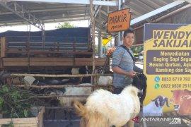 Penjualan hewan kurban di Tanjung Pandan menurun