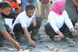 Kapolda Bengkulu  Irjen Pol Teguh Sarwono lepaskan 275 ekor bayi penyu