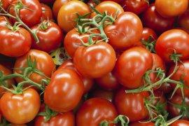 Kelompok tani muda asal Bandung kembangkan tomat beef