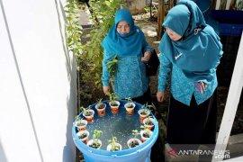 PKK HSS gencarkan budi daya ikan di dalam ember