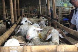 Pemerintah Kabupaten Bangka Selatan siapkan 500 hewan kurban