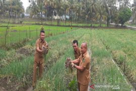 Penangkaran bawang merah akan dibuat di Desa Lumban Pasir