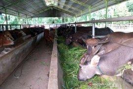 Jumlah hewan kurban di Abdya turun 10 persen dari tahun lalu