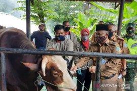 Hewan kurban Presiden Jokowi di Jambi berbobot 900 kilo dinyatakan sangat sehat