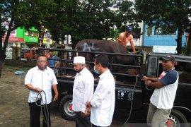 Imam masjid: sumbangan hewan kurban MPH Sinode GPM  bermanfaat
