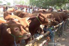 Penjualan hewan kurban di Ngawi turun drastis jelang Idul Adha