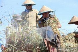 Pemkot Bengkulu salurkan benih padi untuk 450 hektare sawah