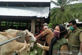 Pemkot Padangsidimpuan periksa kesehatan hewan kurban