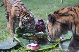 70 persen habitat harimau di Sumatera di luar kawasan konservasi