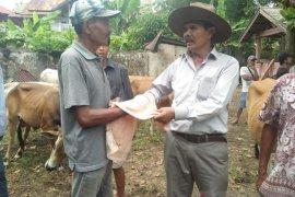 Karena COVID-19, daya beli terhambat hingga harga sapi kurban di Padang Pariaman turun 10 persen