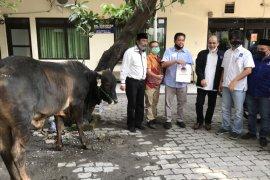 Jelang Idul Adha, NasDem Jatim serahkan tiga sapi ke organisasi media