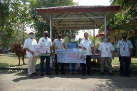 PT Timah serahkan bantuan sapi kurban ke Pemkab Bangka Barat