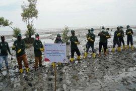 Pertamina MOR I tanam 1.000 bibit mangrove di Pantai Labu