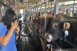 Penjualan hewan kurban menurun terdampak pandemi