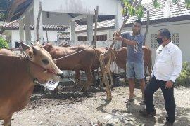 Pemerintah Kabupaten  Bangka distribusikan sembilan ekor sapi kurban