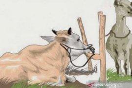 MUI Taput : Penyembelihan hingga pembagian hewan kurban sesuai protokol kesehatan